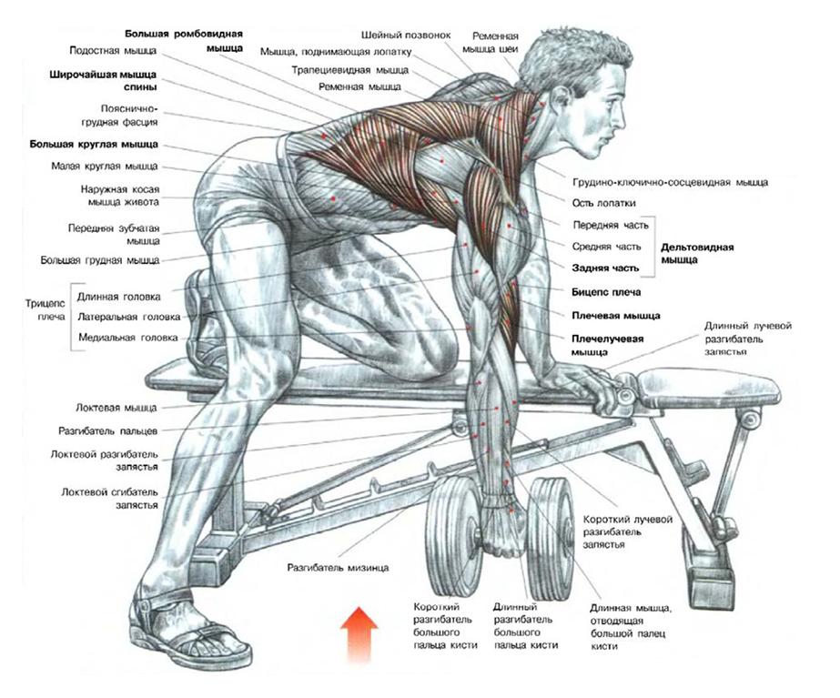 Как накачать мышцы спины позвоночника 194